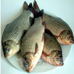 鱼鳞增强记忆 剖析一条鱼的全部营养价值